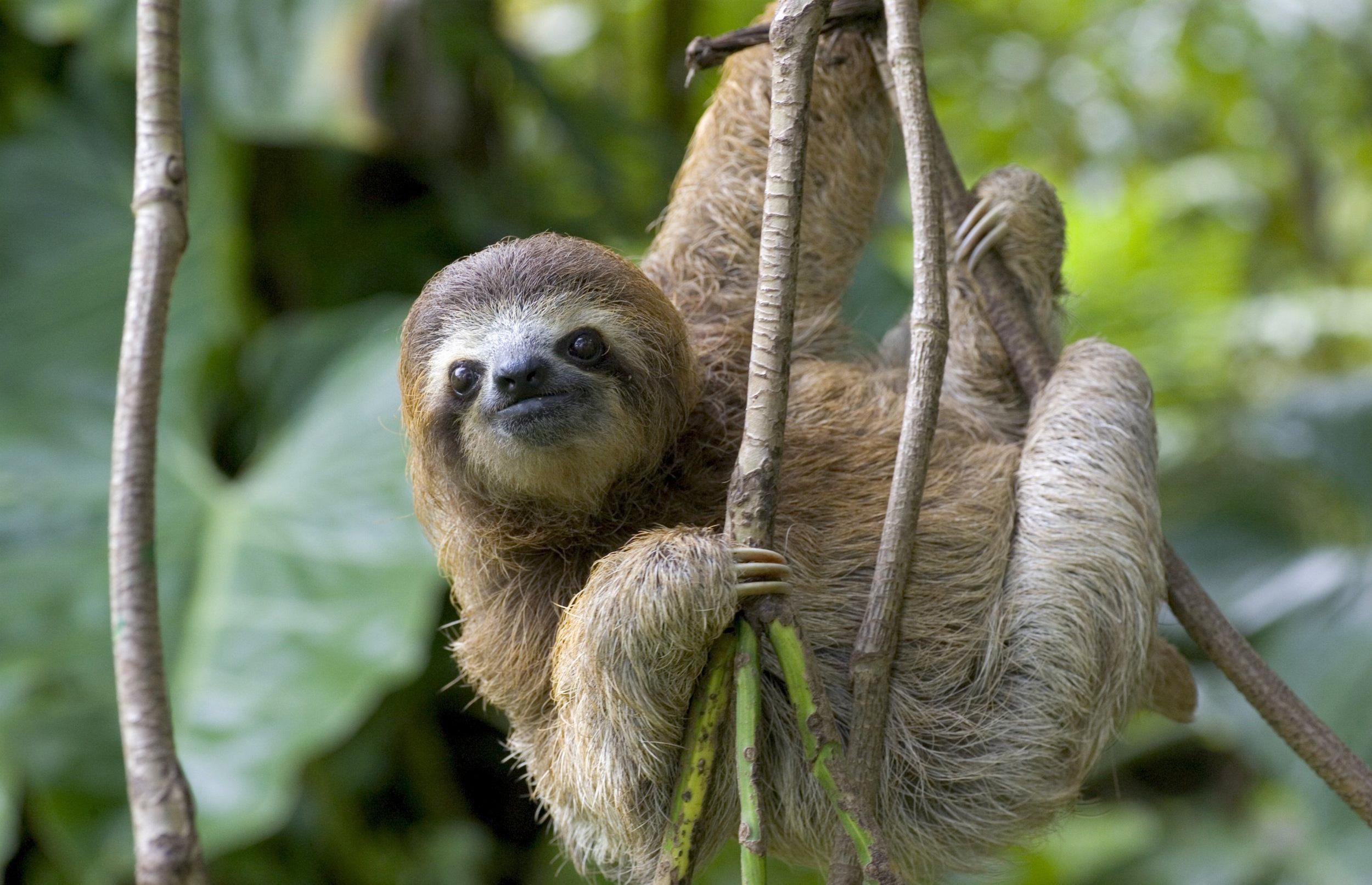 правда сиськи ленивец фото животного поставлялась упаковке, которой